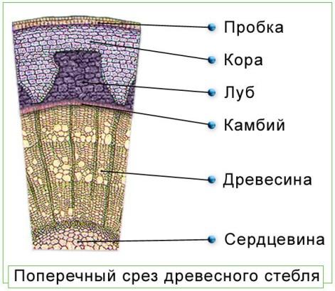 http://yablok.ru/uploads/posts/2013-02/1359832177_razrez.jpg