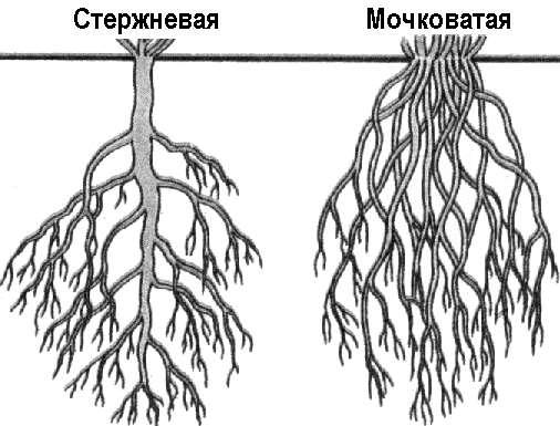 http://geum.ru/next/images/563362-1d83a35e.jpg