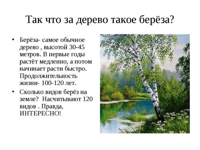 Так что за дерево такое берёза? Берёза- самое обычное дерево , высотой 30-45...