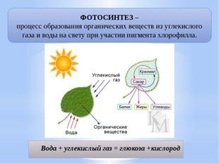 ФОТОСИНТЕЗ – процесс образования органических веществ из углекислого газа и