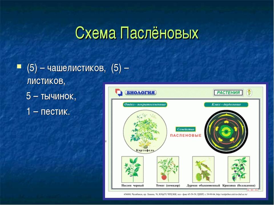 Схема Паслёновых (5) – чашелистиков, (5) – листиков, 5 – тычинок, 1 – пестик.