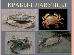 КРАБЫ-ПЛАВУНЦЫ