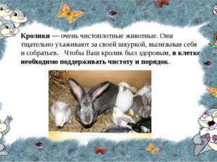 Кролики — очень чистоплотные животные. Они тщательно ухаживают за своей шкурк
