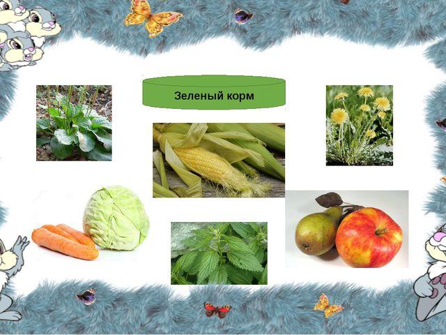 Зеленый корм