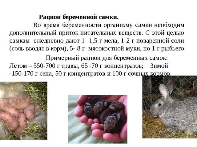 Рацион беременной самки. Во время беременности организму самки необходим доп...