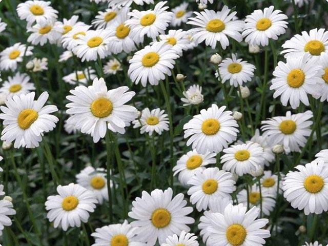 50 Wonderful Flowers HQ Wallpapers