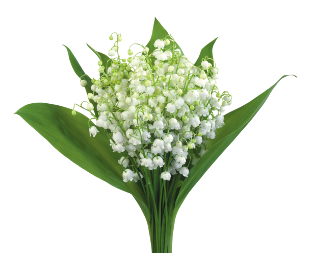 Обои Ландыши Цветы Фото 288866
