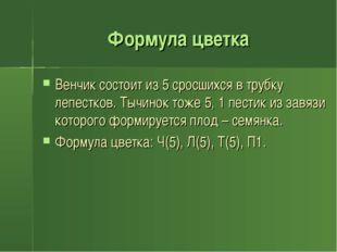 Формула цветка Венчик состоит из 5 сросшихся в трубку лепестков. Тычинок тоже