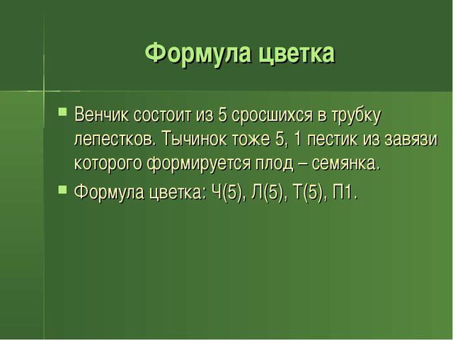 Формула цветка Венчик состоит из 5 сросшихся в трубку лепестков. Тычинок тоже...