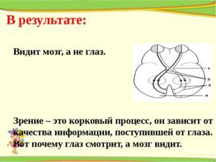 В результате: Видит мозг, а не глаз. Зрение – это корковый процесс, он зависи