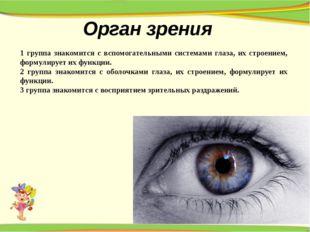 Орган зрения 1 группа знакомится с вспомогательными системами глаза, их строе