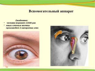 Ежедневно: человек моргает 11500 раз наши слезные железы производят 3 наперс