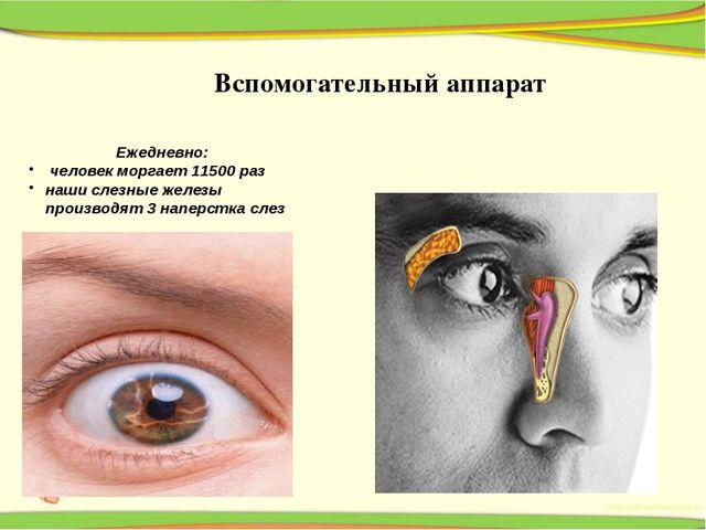 Ежедневно: человек моргает 11500 раз наши слезные железы производят 3 наперс...