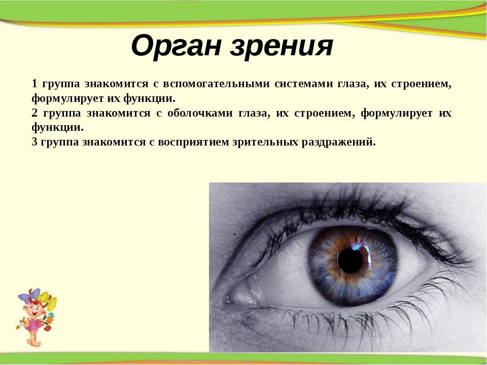 Орган зрения 1 группа знакомится с вспомогательными системами глаза, их строе...