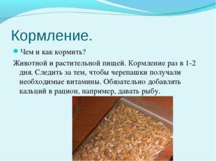 Кормление. Чем и как кормить? Животной и растительной пищей. Кормление раз в