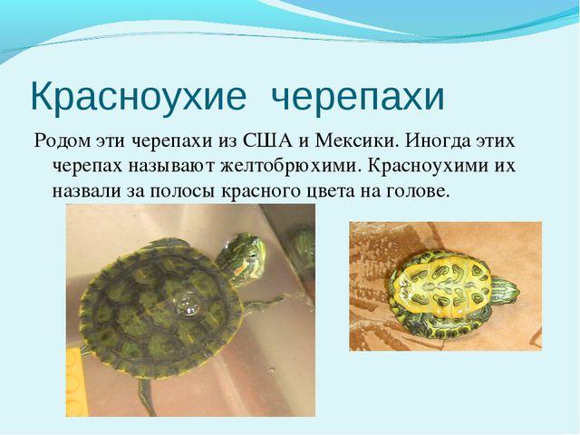 Красноухие черепахи Родом эти черепахи из США и Мексики. Иногда этих черепах...