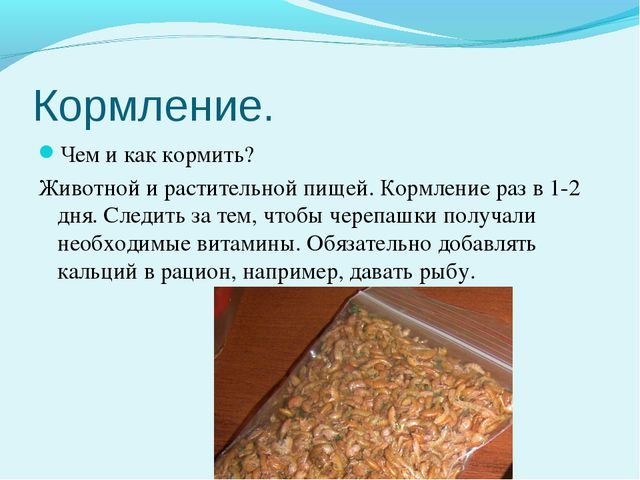 Кормление. Чем и как кормить? Животной и растительной пищей. Кормление раз в...