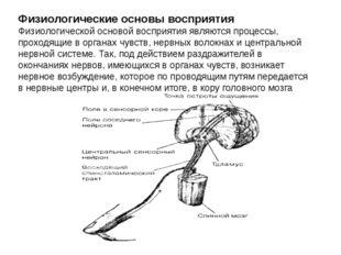 Физиологические основы восприятия Физиологической основой восприятия являются
