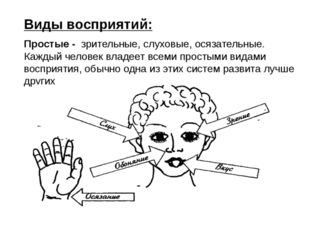Виды восприятий: Простые - зрительные, слуховые, осязательные. Каждый челове