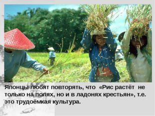 Японцы любят повторять, что «Рис растёт не только на полях, но и в ладонях к