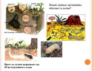 Какие живые организмы обитают в почве? Крот за сутки вырывает до 30 м подземн