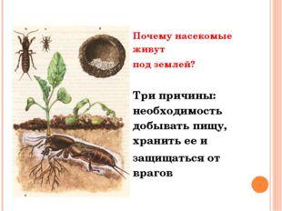 Почему насекомые живут под землей? Три причины: необходимость добывать пищу,