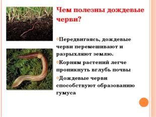 Чем полезны дождевые черви? Передвигаясь, дождевые черви перемешивают и разры