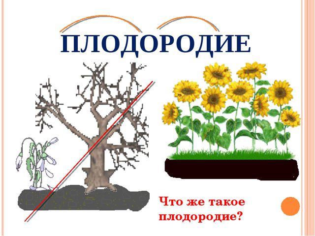 ПЛОДОРОДИЕ Что же такое плодородие?