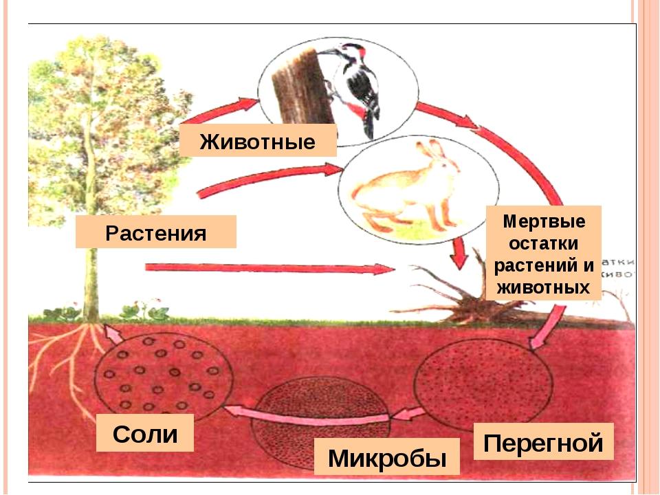 Животные Растения Мертвые остатки растений и животных Перегной Микробы Соли