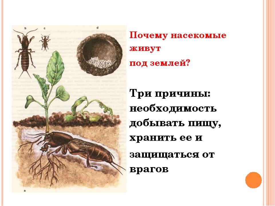 Почему насекомые живут под землей? Три причины: необходимость добывать пищу,...
