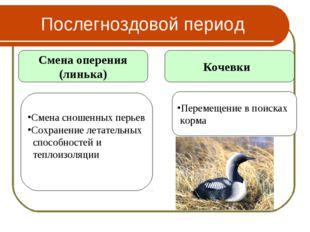 Послегноздовой период Смена оперения (линька) Кочевки Смена сношенных перьев
