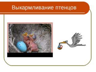 Выкармливание птенцов