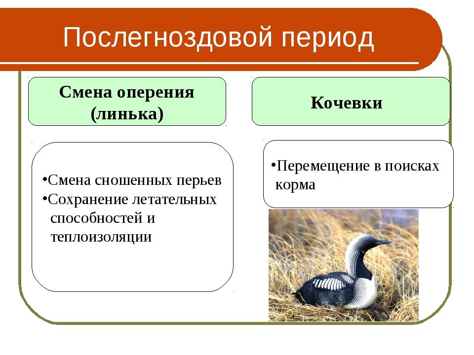 Послегноздовой период Смена оперения (линька) Кочевки Смена сношенных перьев...