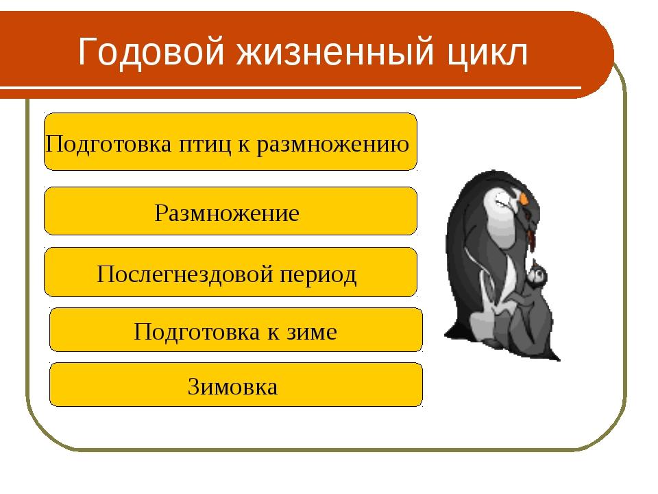 Годовой жизненный цикл Подготовка птиц к размножению Послегнездовой период По...