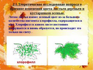 2.1.Теоретическое исследование вопроса о причине изменения цвета листьев дере
