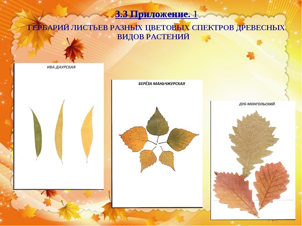 Как сделать гербарий из листьев деревьев