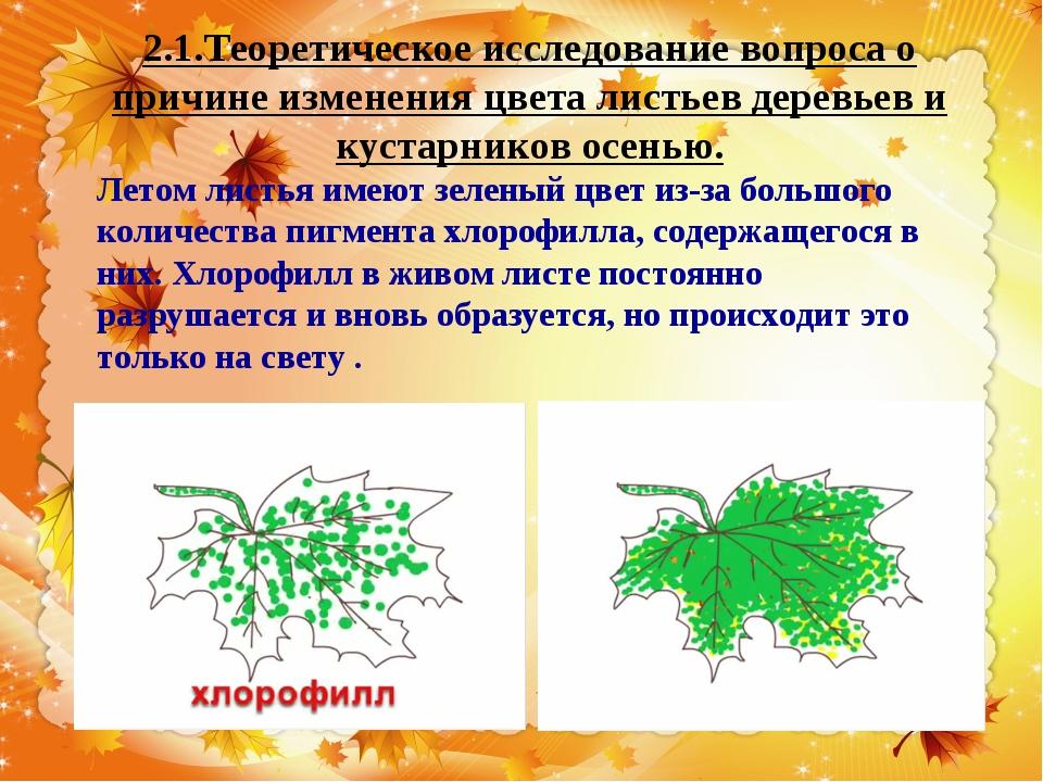 2.1.Теоретическое исследование вопроса о причине изменения цвета листьев дере...