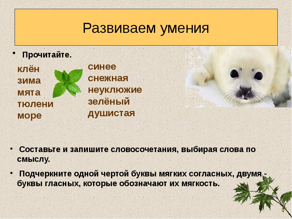Развиваем умения клён зима мята тюлени море Прочитайте. Составьте и запишите...