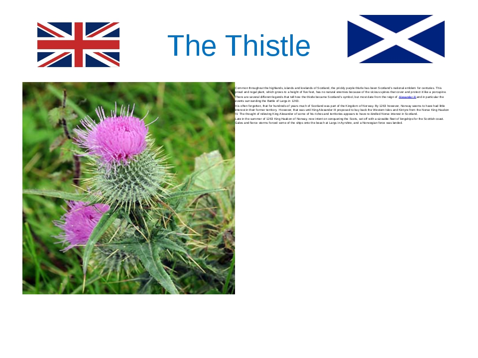 The Thistle Common throughout the highlands, islands and lowlands of Scotland...
