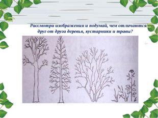 Рассмотри изображения и подумай, чем отличаются друг от друга деревья, кустар
