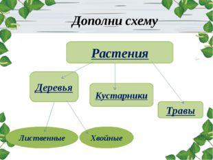 Дополни схему Растения Деревья Кустарники Травы Лиственные Хвойные