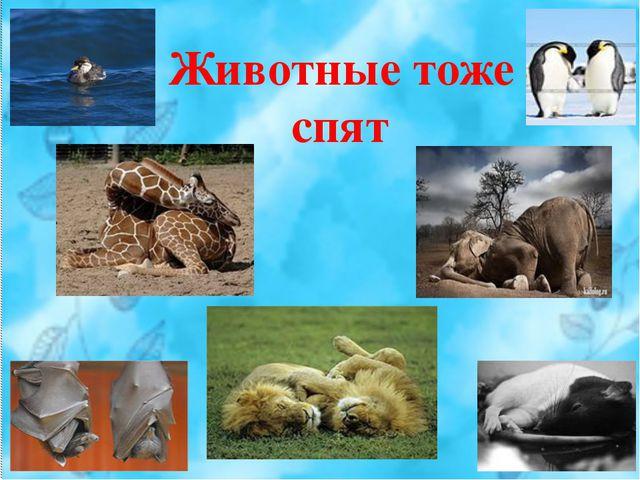 Животные тоже спят