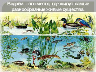 Водоём – это место, где живут самые разнообразные живые существа.