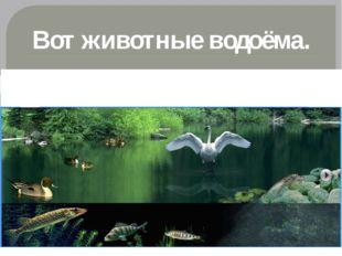 Вот животные водоёма.