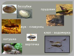беззубки катушка прудовик клоп - водомерка жук - плавунец вертячка
