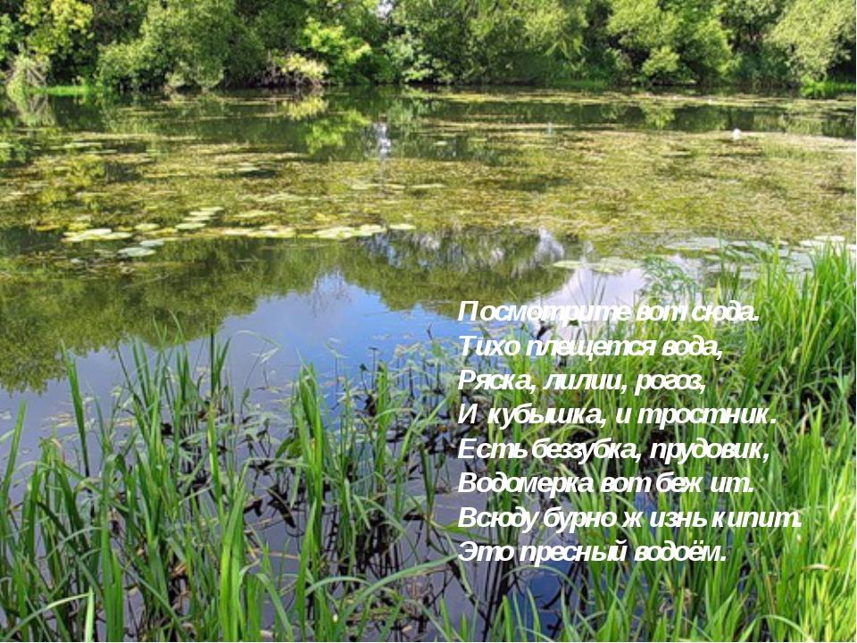Посмотрите вот сюда. Тихо плещется вода, Ряска, лилии, рогоз, И кубышка, и тр...