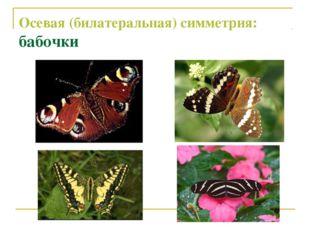 Осевая (билатеральная) симметрия: бабочки