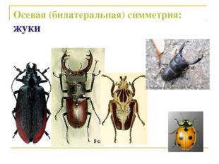Осевая (билатеральная) симметрия: жуки