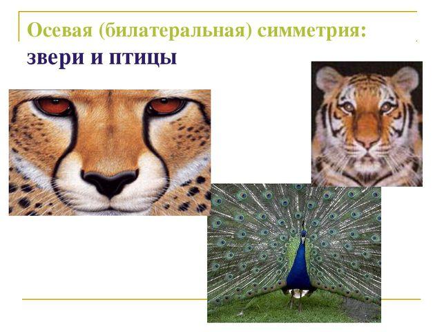 Осевая (билатеральная) симметрия: звери и птицы