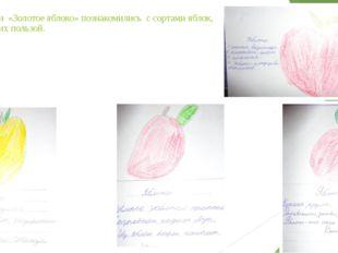 На занятии «Золотое яблоко» познакомились с сортами яблок, целебной их пользой.